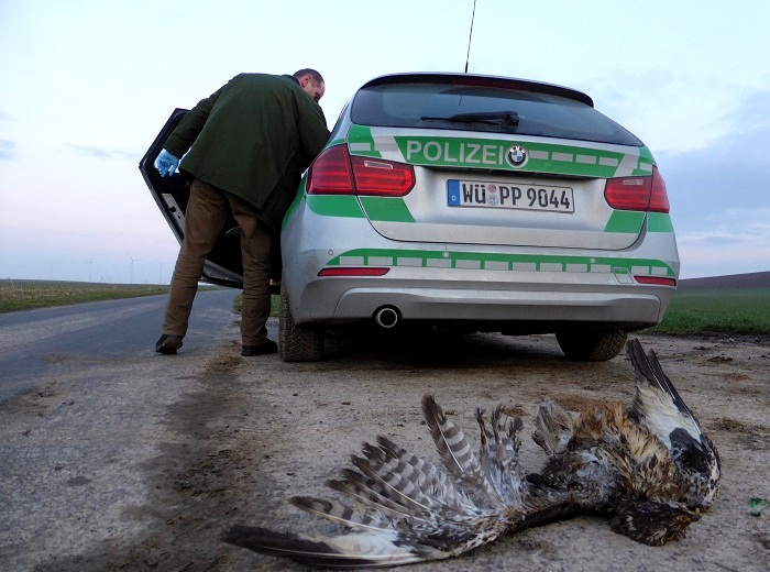 Poisoned buzzard seized by police.