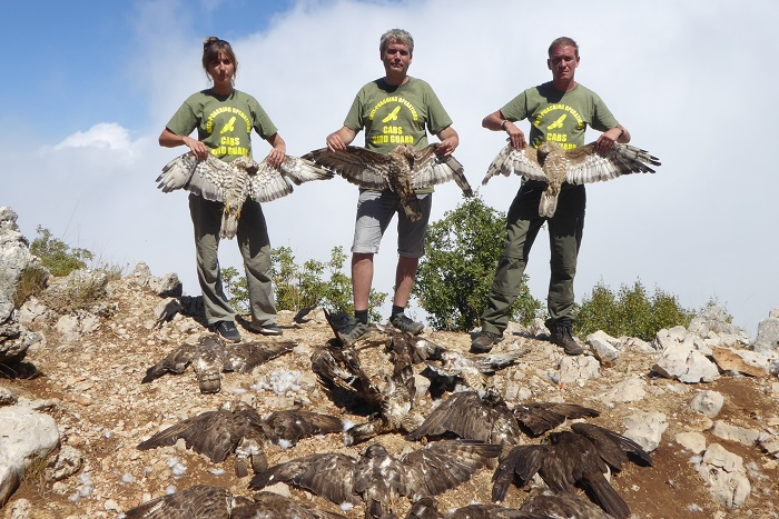 CABS members with shot honey buzzards found on Mount Lebanon